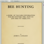 Bee Huning by Lockard
